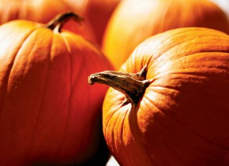Pumpkins for carving or baking