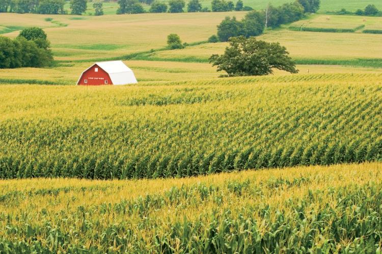 Ohio Top 10 Commodities Farm Flavor
