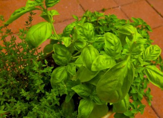Herb garden with thyme, basil, oregano