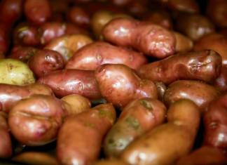 Potato Recipes for Thanksgiving