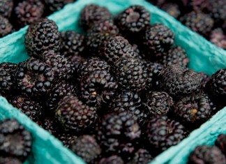 Blackberries Season