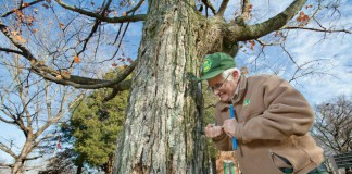 Tennessee Forestry Industry – Sugar Maple Tree Core Sample