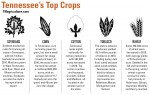 tennessee top crops infographic
