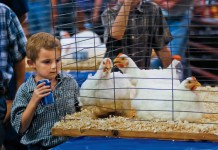 Illinois State Fairs Promote Agriculture