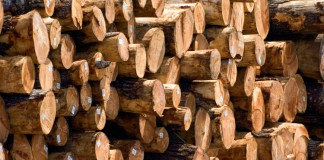 Georgia Forestry Industry
