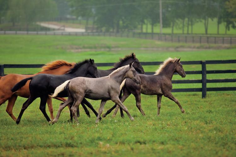 Kentucky Equine Industry