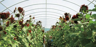 High Tunnels in Mississippi