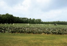 Arkansas Gleaning Project