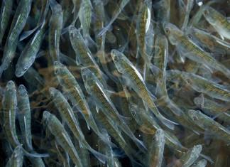 Arkansas Aquaculture