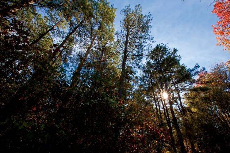 Arkansas Forests