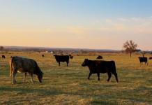 Arkansas Agriculture