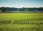 Missouri Soybeans
