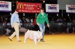 Oklahoma Youth Expo