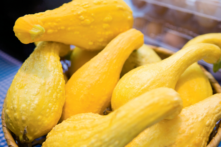 Tips for harvesting squash
