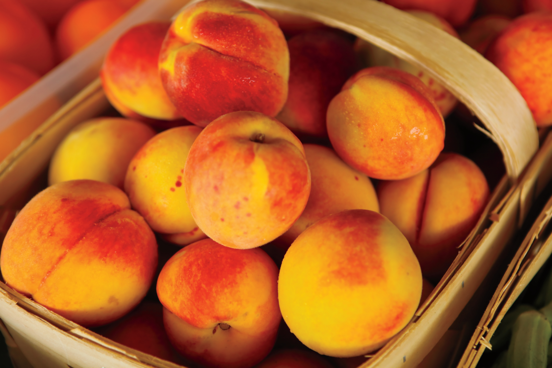 How Peaches Are Harvested And Other Peach Fun Facts Farm Flavor