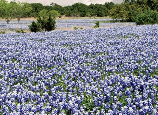 Texas horticulture