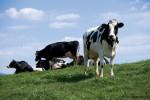 Highland Dairy Farm