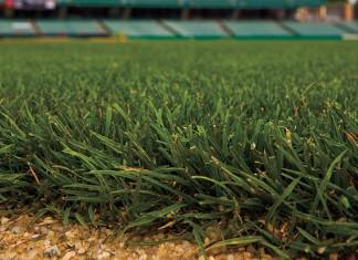 New Jersey turfgrass