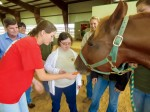 Therapeutic Riding and Activity Center