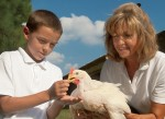 Mississippi Broilers