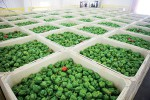 New Jersey food processing