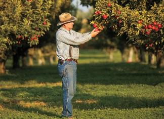 New Jersey fruit