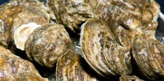 New Jersey shellfish