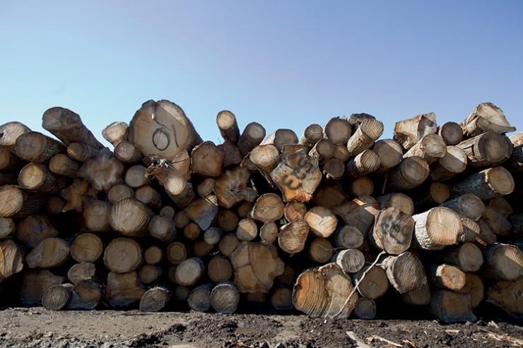 lumber yard of Augusta Lumber