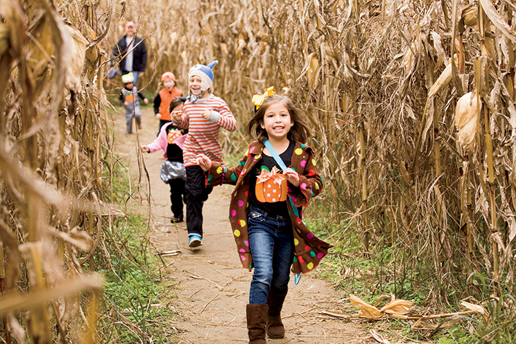 Historic Gentry Farm Corn Maze