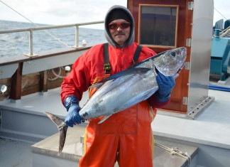 Oregon albacore