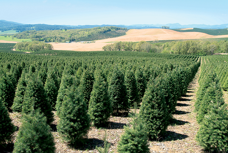 Oregon S Nursery And Christmas Tree Industry Grows Farm