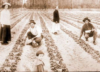 Florida agriculture history