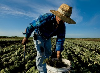 Florida horticulture