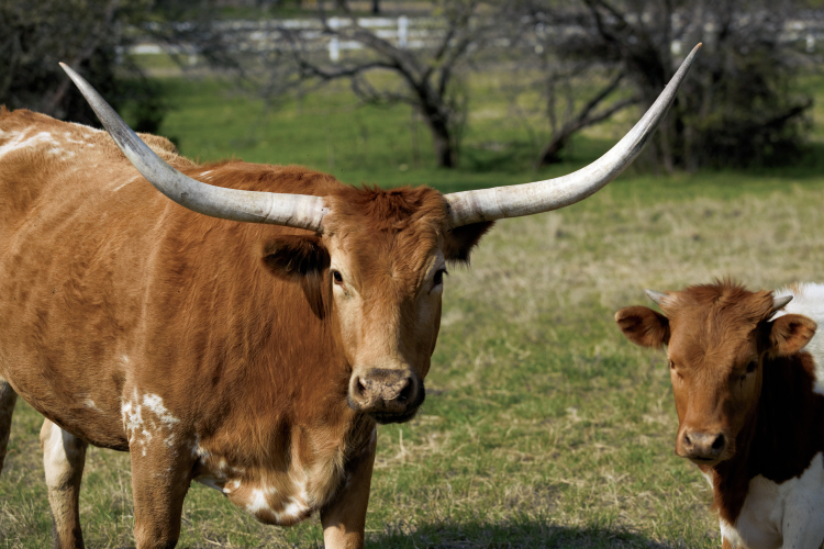 Top Texas Agricultural Products Farm Flavor