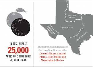 Texas Agriculture [Infographic]
