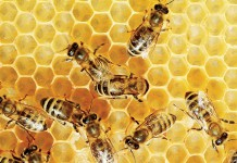 Florida bees