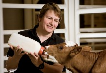 Oklahoma veterinary programs