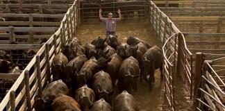 Oklahoma National Stock Yards