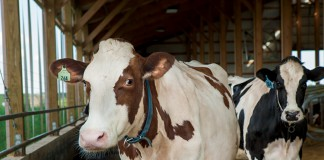 30x20 Dairy Grant Program