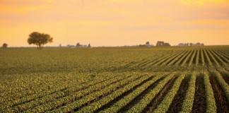 Mississippi Crop Consultants