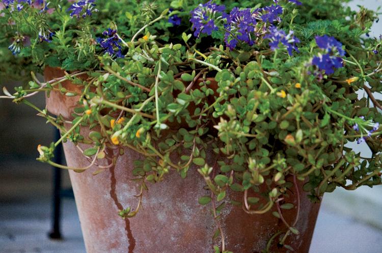 Container gardening flower garden plants