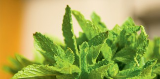 Mint trivia and fun facts