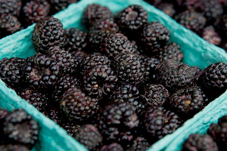 Blackberries Season