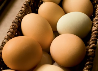 Farm Facts about Eggs