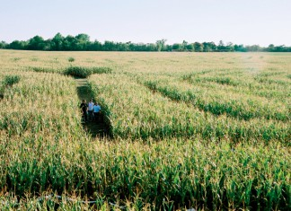 Corn Mazes Use Technology to Amaze and Educate Visitors