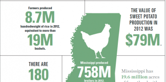 Mississippi Agriculture Infographic