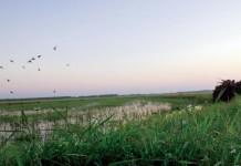 Stuttgart Rice Fields