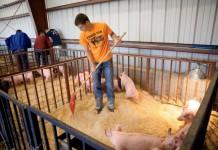 Arkansas Agricultural Education