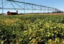Illinois Soybeans