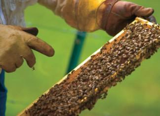 Honeybee Facts